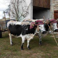 ferme Roland Ayel fête du lait bio