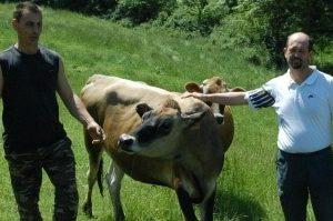 gaec de la brumagne fête du lait bio