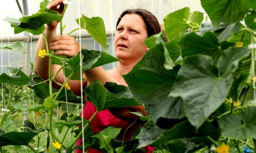 Les légumes de Ninian - Virginie Merian